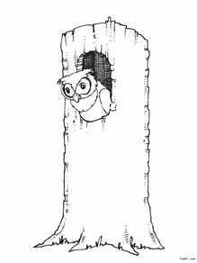 猫头鹰5 高清图片